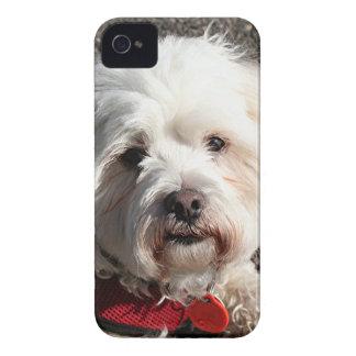 かわいいbichonのfrise犬 Case-Mate iPhone 4 ケース