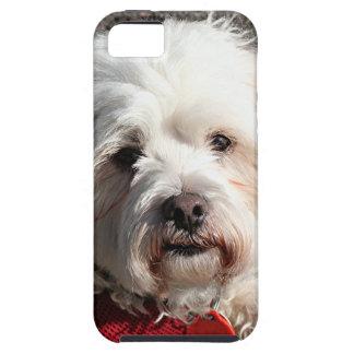 かわいいbichonのfrise犬 iPhone SE/5/5s ケース