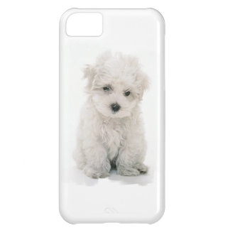 かわいいBichon Frise iPhone5Cケース