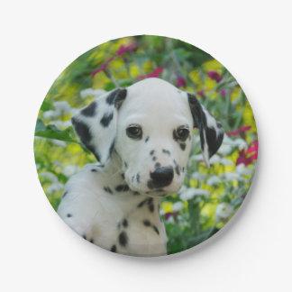 かわいいDalmatian犬のかわいい子犬のポートレート、パーティ ペーパープレート