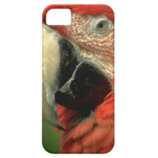 かわいいiPhone 5のケースの美しいコンゴウインコのオウム iPhone SE/5/5s ケース