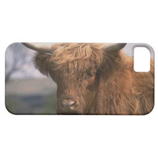 かわいいiPhone 5のケースの美しいスコットランド牛 iPhone SE/5/5s ケース