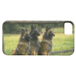 かわいいiPhone 5匹のケースの美しいジャーマン・シェパード iPhone SE/5/5s ケース