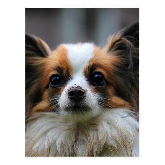 かわいいpapillon犬 ポストカード