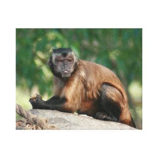 かわいくしかし不機嫌なCapuchin猿 キャンバスプリント