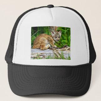 かわいく小さいカナダのオオヤマネコの子ネコ キャップ