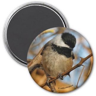 かわいく有望で空腹な黒おおわれた《鳥》アメリカゴガラ マグネット