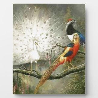 かわいく白い孔雀のカップルのキジのパーティを楽しむこと フォトプラーク