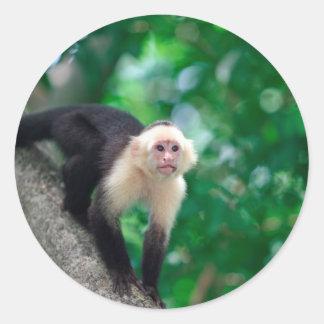かわいく白い直面されたcapuchin猿ニカラグア ラウンドシール