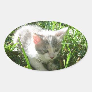 かわいく若い子ネコ 楕円形シール