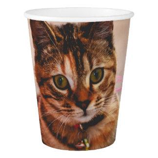かわいく若い虎猫猫の子ネコの子猫ペット 紙コップ