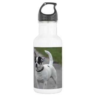 かわいく見ているテリア犬! ウォーターボトル