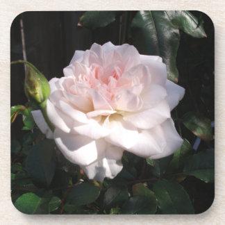 かわいらしいピンクのバラ コースター