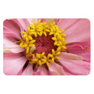 かわいらしいピンクの《植物》百日草の報酬の磁石 マグネット
