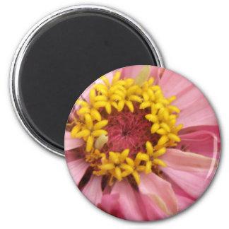 かわいらしいピンクの《植物》百日草の磁石 マグネット