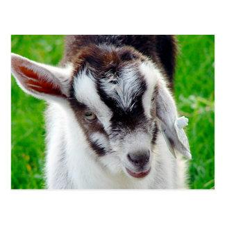 かわいらしいヤギの子供 ポストカード
