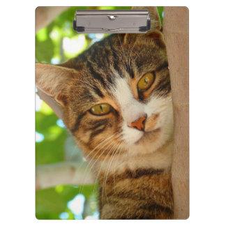 かわいらしい子猫猫の木 クリップボード