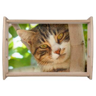 かわいらしい子猫猫の木 トレー