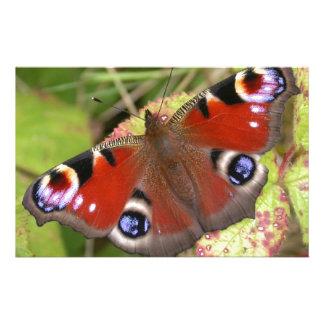 かわいらしい孔雀蝶 便箋