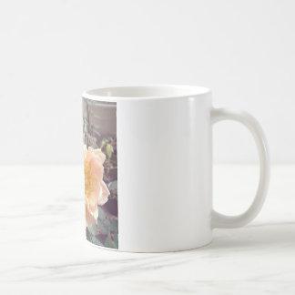 かわいらしい朝のばら色の写真撮影 コーヒーマグカップ