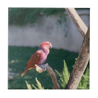 かわいらしい男の子の赤の鳥 タイル