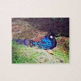 かわいらしい男性のpalawan孔雀キジの鳥のモデル ジグソーパズル