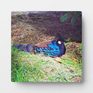 かわいらしい男性のpalawan孔雀キジの鳥のモデル フォトプラーク