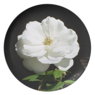 かわいらしい白いバラ プレート