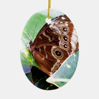 かわいらしい目の蝶ガの茶色の日焼けの写真の虫 セラミックオーナメント