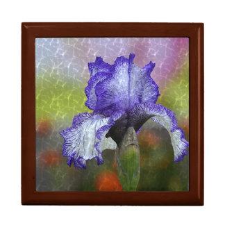 かわいらしい紫色のアイリス ギフトボックス