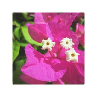 かわいらしい紫色のブーゲンビリア キャンバスプリント