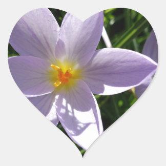 かわいらしい紫色の庭の花。 美丽的紫色花 ハートシール