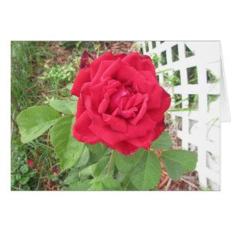かわいらしい赤いバラおよび格子写真空白のなカード カード