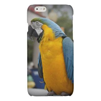 かわいらしい鳥