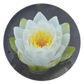 かわいらしく白い《植物》スイレンのプレート プレート