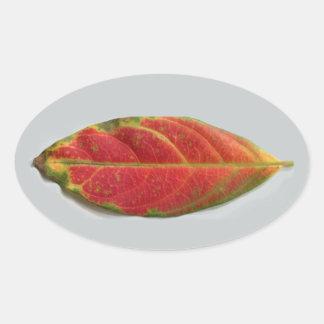 かわいらしく赤い葉の楕円形のステッカー、シーラー、ラベル 楕円形シール
