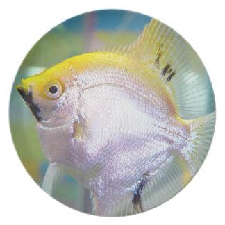 かわいらしく黄色および白身魚 プレート