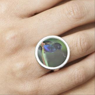 かわいらしく黒く、青および緑のハチドリ 指輪