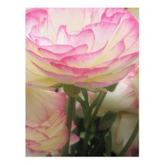 かわいらしく、ピンク ポストカード