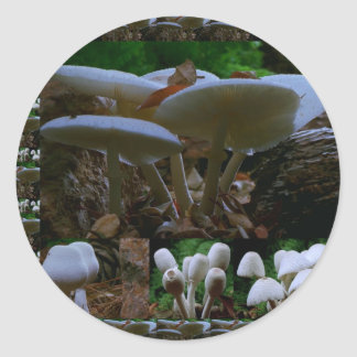 きのこ: 野生の菌類の花はnの共有の喜びを楽しみます ラウンドシール