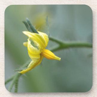 きゅうりの植物の花 コースター
