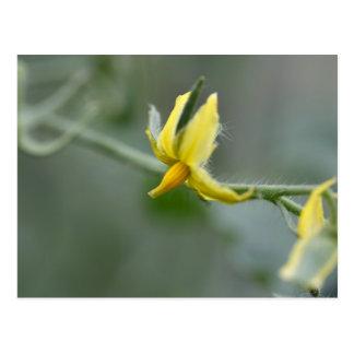 きゅうりの植物の花 ポストカード