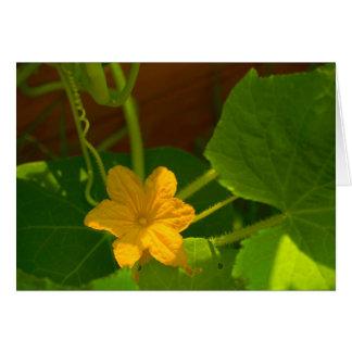 きゅうりの開花 カード