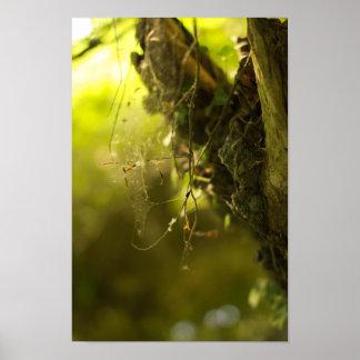 くもの巣の夜明け ポスター