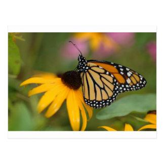くもの巣(昆虫)オオカバマダラ、モナークの水彩画 ポストカード