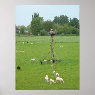 こうのとりの巣ポーランド人及び草原の写真の子ヒツジを持つヒツジ ポスター