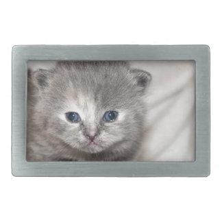 この小さい灰色の子ネコを見て下さい 長方形ベルトバックル