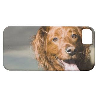 この犬は部分のゴールデン・リトリーバーです Case-Mate iPhone 5 ケース
