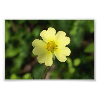 これは黄色い花のプリント6x4です フォトプリント