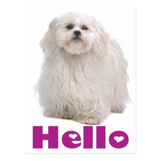 こんにちはシーズー(犬)のTzuの小犬の郵便はがき ポストカード